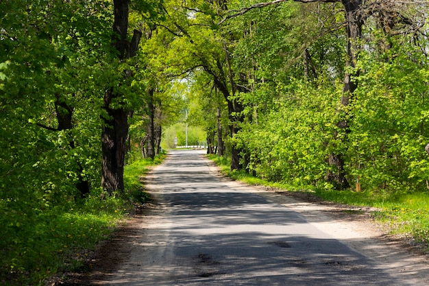 春のoの木の下の田舎道の風景。緑のトンネルと空のアスファルト道路。