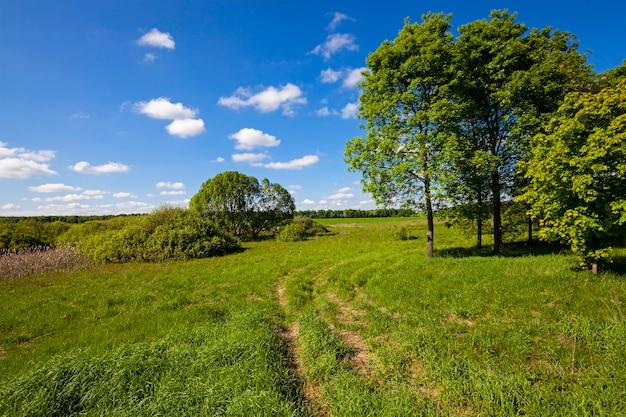 시골 길-나무가 자라는 아스팔트가 아닌 시골 길