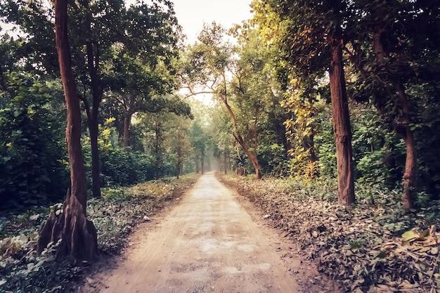 深い緑の森を抜ける田舎道。自然な夏の背景。遠近法のある風景。森の茂みに入る長い林道。