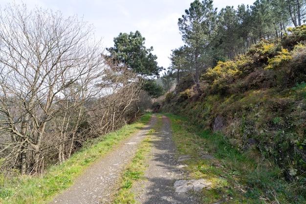 Сельская дорога с деревьями и растительностью по бокам. горизонтальная фотография.