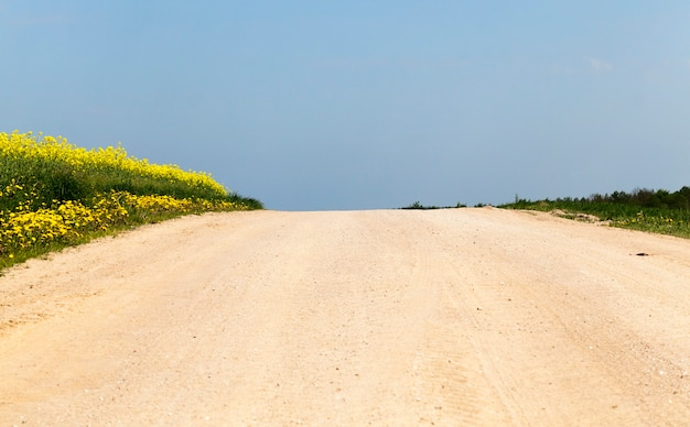 A rural road without asphalt, on one side of which blooming rapeseed grows, and on the other side green wheat