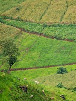 농촌 현장, 치앙마이 태국 시골