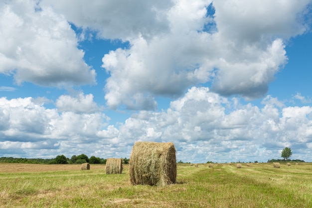 Rural scene of stacks on the field on a sunny summer day.