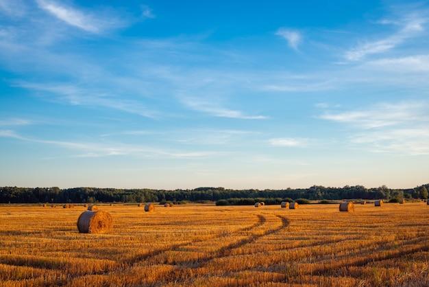 Сельский вид на поле с тюками соломы во время заката, спокойная атмосфера