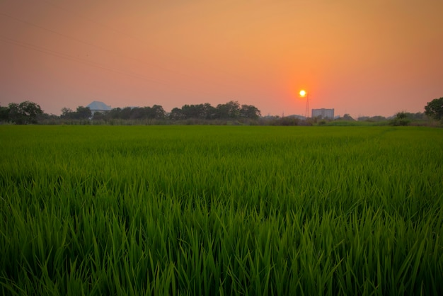 Rural view of paddy field with morning sun and canal paddle natural beauty in ayutthaya.