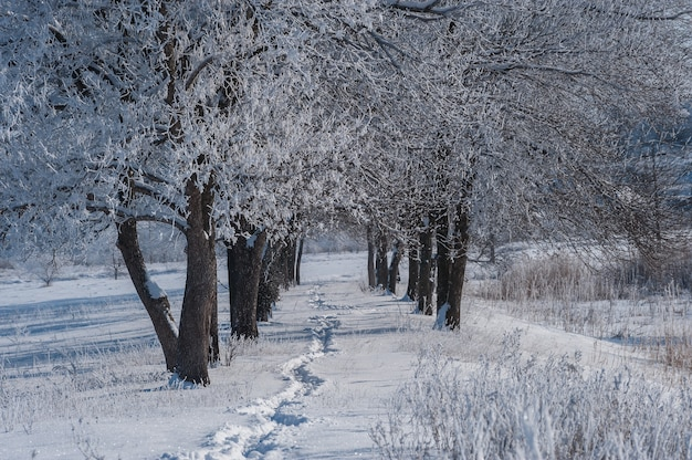Rural winter landscape with footpath in snow