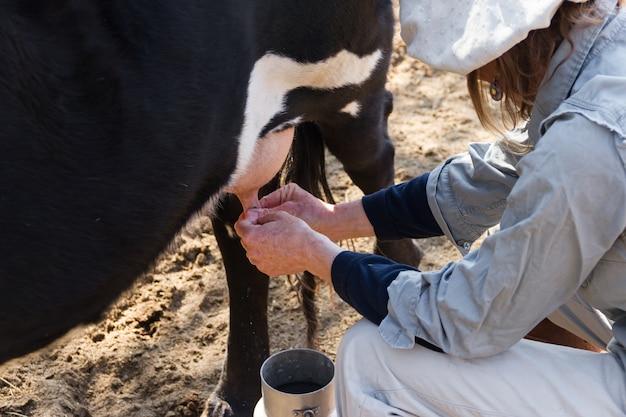 農村の働く女性が牛を搾乳