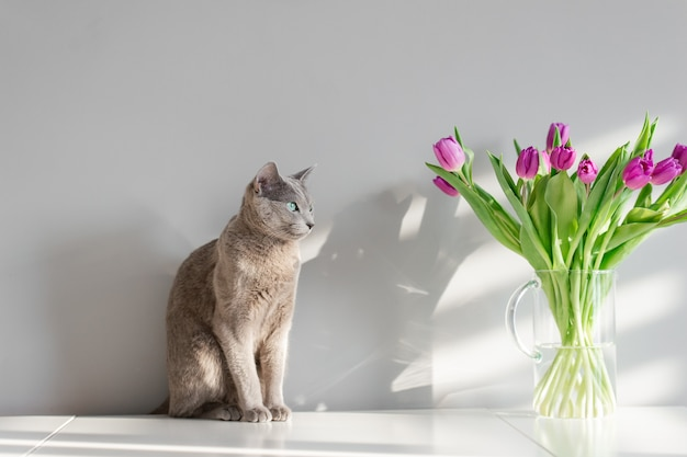 Russian blue cat sitting on table. lovely kitten posing with flowers on gray wall