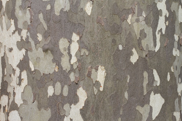 Russian camouflage fabric or green and white texture