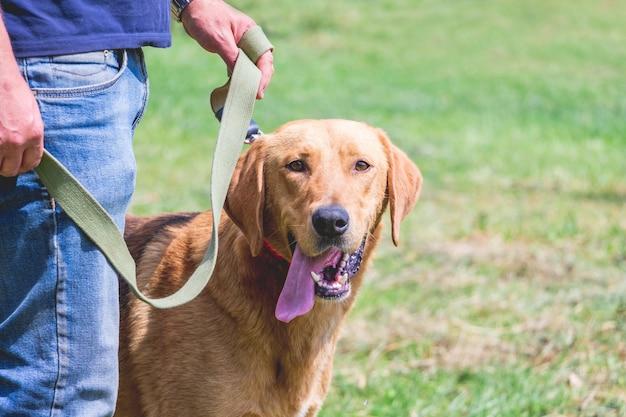 散歩中にホストとひもにつないでロシアの猟犬