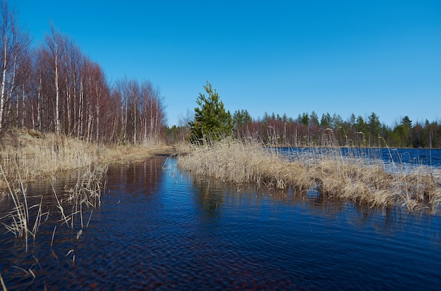 봄 숲에서 러시아 풍경 봄 호수에 홍수