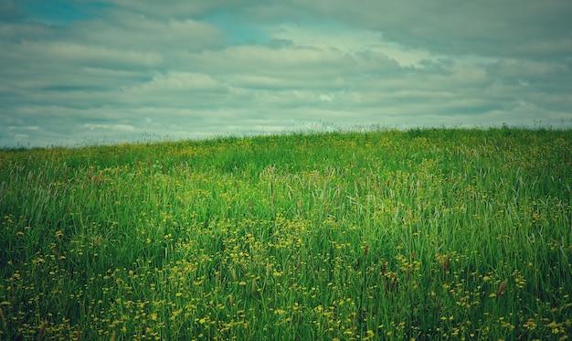 꽃과 러시아 봄 초원입니다.아르한겔스크 지역입니다. 러시아 북부.