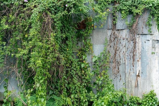 Rust старая металлическая кровля с зеленым листом