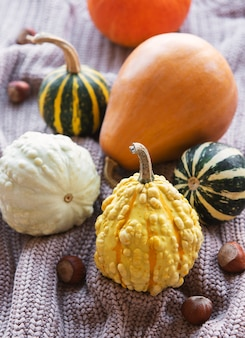 A rustic autumn still life with pumpkins on knitted textile background