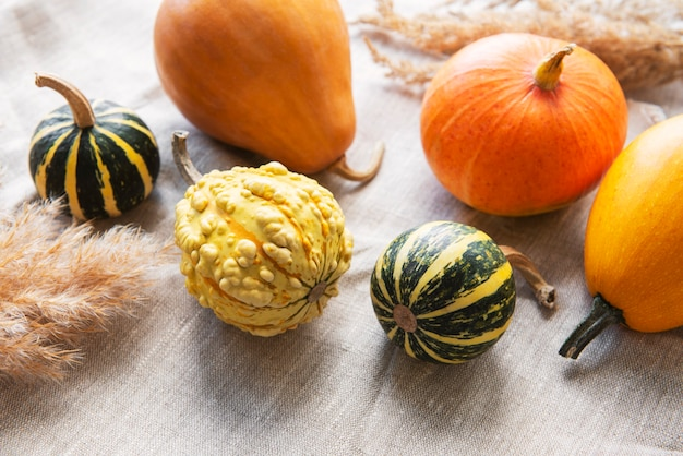 A rustic autumn still life with pumpkins on textile background