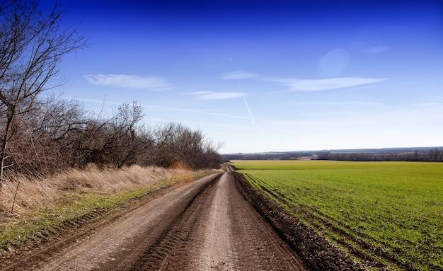 緑のライ麦畑と美しい青い空の風景の近くの素朴な未舗装の道路