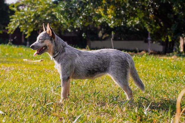 公園の素朴なheeler犬小屋の子犬