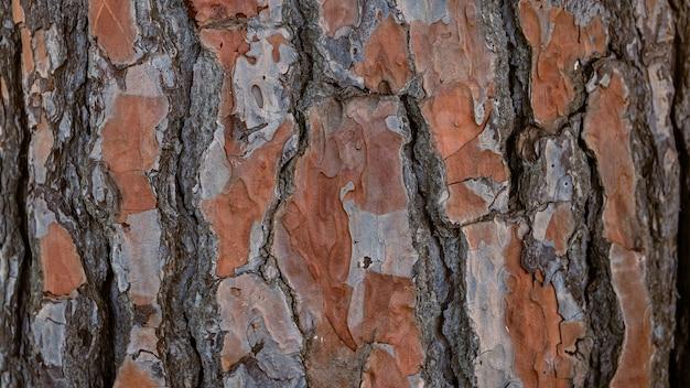 セビリアスペインの素朴な木の背景イタリアカサマツ