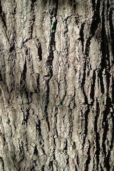 素朴な木の樹皮のテクスチャ背景パターン。デザインの木製ストリッパーテクスチャの抽象的な背景