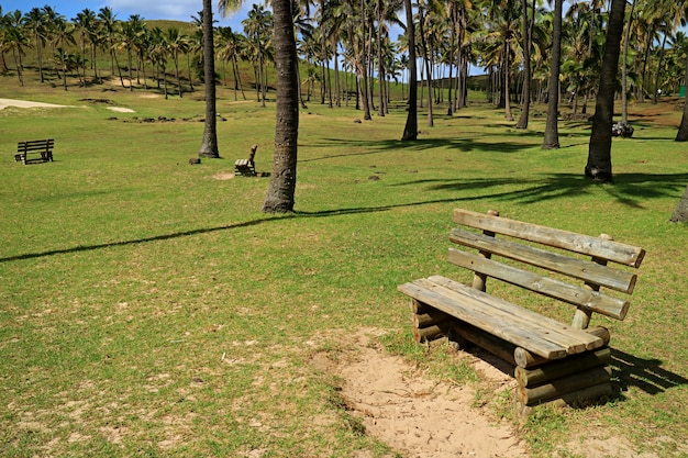 Rustic wooden benches in the sunlight at anakena beach, easter island, chile