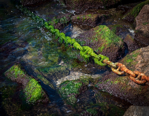 Rusty chain overgrown with green alga sticks out of the sea