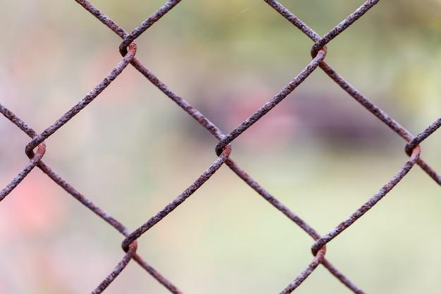 Rusty fence rabitz