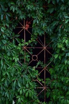 Решетка для забора, увитая ржавой виноградной лозой. сумерки позади нее.