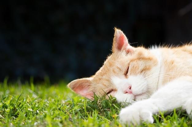 美しい春の日没の間に広大な植物園でリラックスするさびた素敵な猫。幸せそうに見える