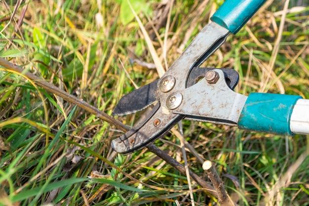 晴れた日に草を刈るさび剪定ばさみ