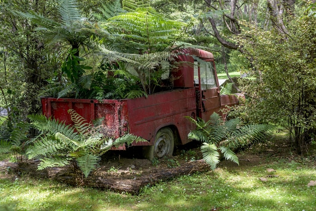 Rusty red car lying abandoned in a forest background surrounded by trees