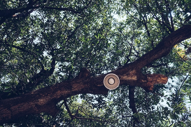 Rusty rusty street lamp screwed to a tree branch. decorative outdoor string lights hanging on tree in the garden.