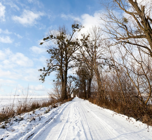 겨울철 시골 길을 따라 차를 몰고 나간 뒤 길을 따라 오래된 나무가 자랍니다.