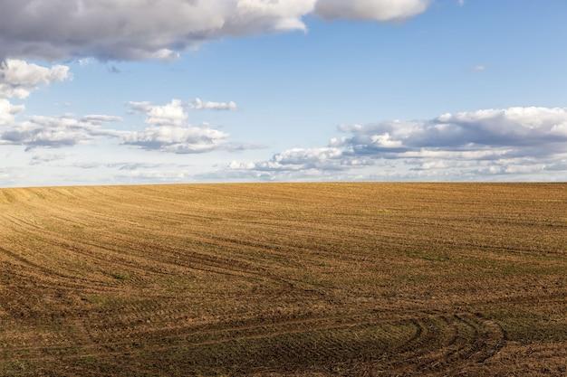 ライ麦畑の風景