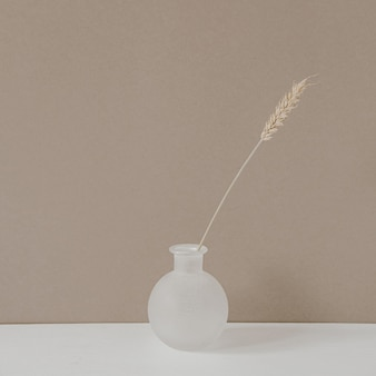 Rye or wheat ear stalk in vase standing on white table against neutral pastel beige wall background.