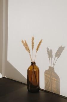Rye  wheat ear stalks in oldfashioned bottle. warm sun light shadows on the wall. minimalistic home interior design