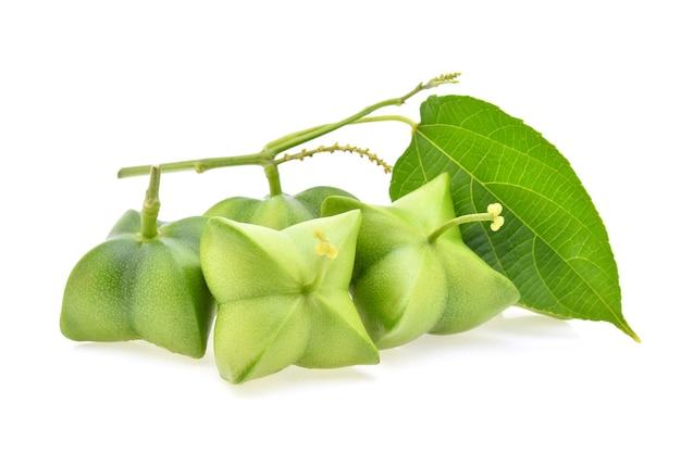 Sacha inchi peanut isolated on white background
