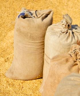 Мешки с урожаем пшеницы и желтое hweat на фоне.