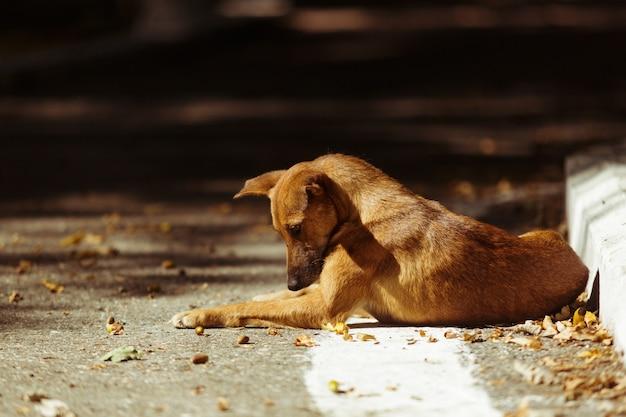 땅에 누워 슬픈 버려진 개입니다. 아름다운 눈을 가진 귀여운 노숙자 애완동물. 배고픈 길 잃은 애완 동물.