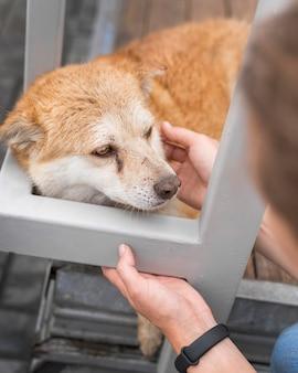 避難所で悲しい犬が女性にペットを飼っている