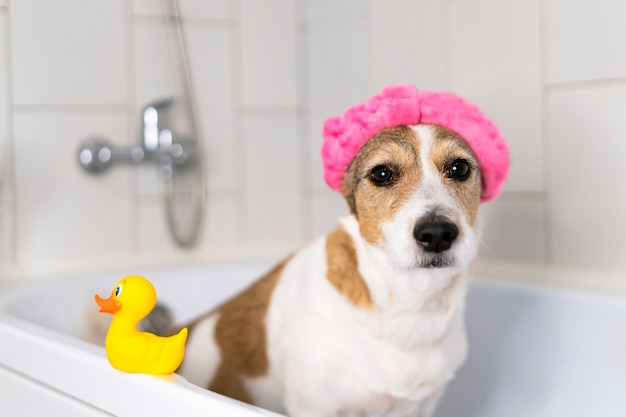 Sad dog in the bathroom with a cap on his head offended pet takes a shower