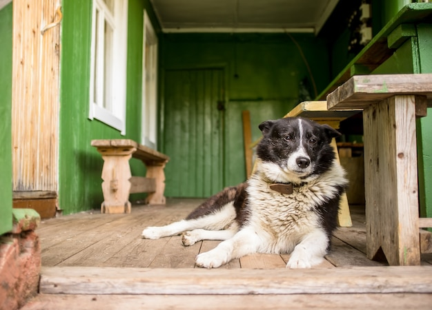 Sad dog is missing alone, sitting on the porch of a country house