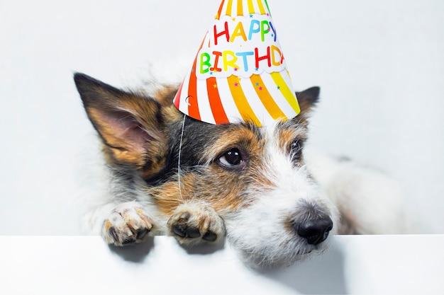 Грустная собака на белом фоне в кепке, с днем рождения. домашнее животное грусти на празднике. копировать пространство