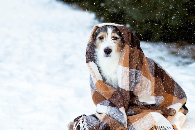 Sad dog in the street in a blanket in the snow.