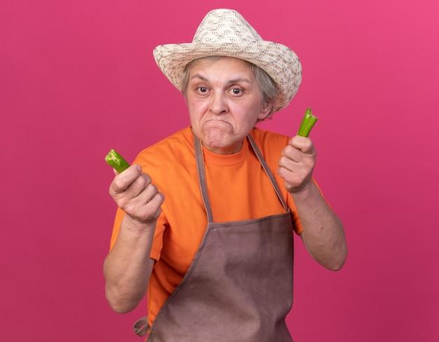 コピースペースでピンクの壁に分離された壊れた唐辛子の一部を保持しているガーデニング帽子をかぶって悲しい年配の女性の庭師