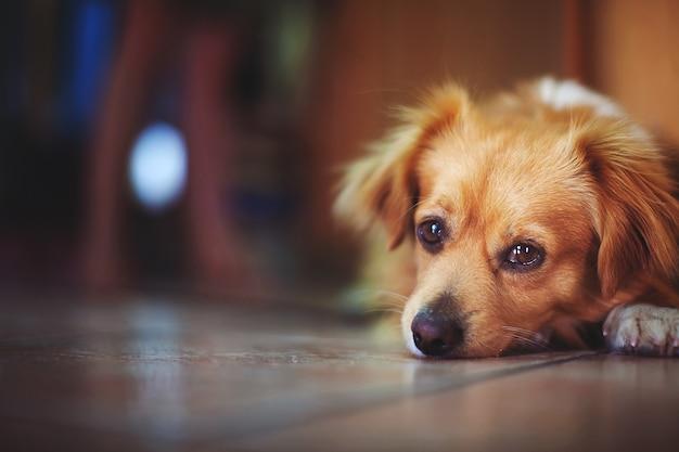 Грустный одинокий бездомный щенок, лежащий на полу