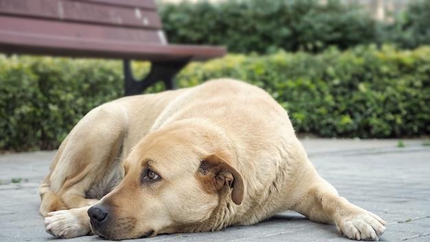 歩道に横たわって周りを見回している悲しそうな犬