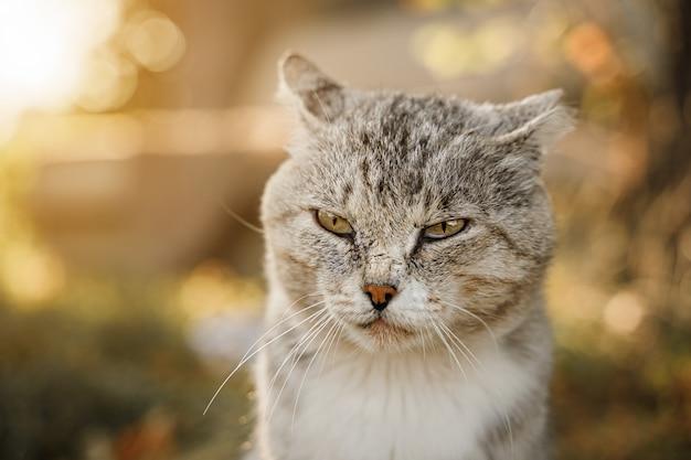 Грустный старый кот греется на солнышке