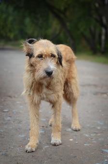 The sad old stray dog