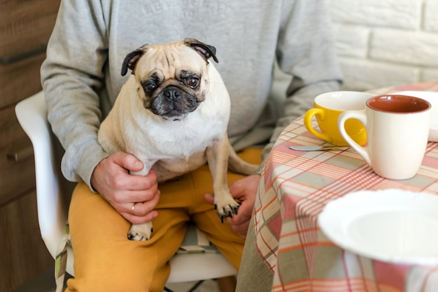 Sad pug dog sitting in his owner's lap in the kitchen. selective focus on dog.