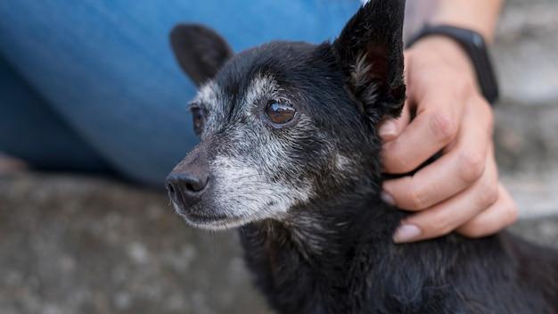 Sad rescue dog being pet at adoption shelter